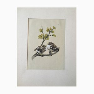 Sperling, Sparrow, Watercolor