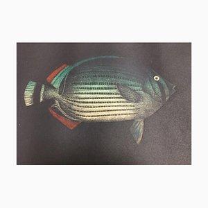 Yokoi Tomoe, 1943, Fish Ed, Aguatinta