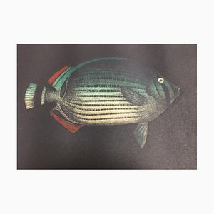 Yokoi Tomoe, 1943, Fish Ed, Aquatint