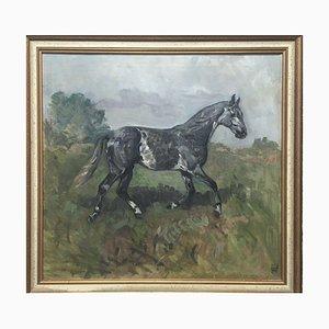 Hélène Meyer, 1898-1958, Étalon Cheval Noir, Huile sur Toile