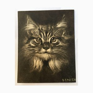F. Enlen, Cat, Charcoal