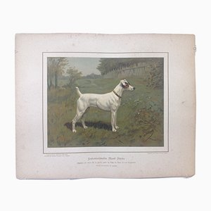 H. Sperling für Wilhelm Greve, Fox Terrier Hund, Antike Chromolithografie eines reinrassigen Hundes