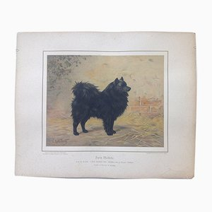 H. Sperling pour Wilhelm Greve, Chien Spitz Noir, Chromolithographie Antique d'un Chien de Race Pure