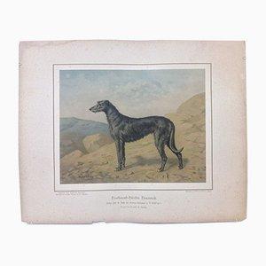 H. Sperling for Wilhelm Greve, Deerhound Dog, Antique Chromolithograph of a Purebred Dog