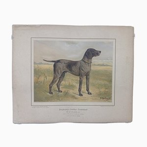 H. Sperling for Wilhelm Greve, German Short-Haired Pointing Dog Spotted, Antique Chromolithograph of a Purebred Dog