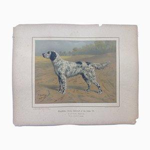 H. Sperling für Wilhelm Greve, Englischer Setterhund, Antike Chromolithographie eines reinrassigen Hundes