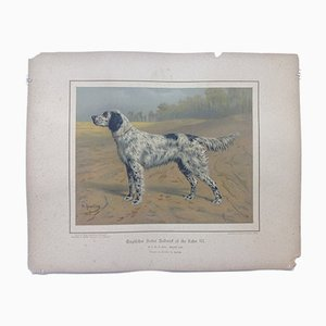 H. Sperling per Wilhelm Greve, Setter inglese, Cromolitografia antica raffigurante un cane di razza