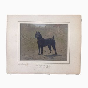 H. Sperling for Wilhelm Greve, Wire-Haired German Pincher Dog, Antique Chromolithograph of a Purebred Dog