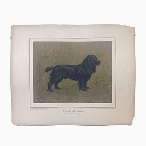 H. Sperling for Wilhelm Greve, Black Field Spaniel Dog, Antique Chromolithograph of a Purebred Dog