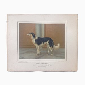 H. Sperling for Wilhelm Greve, Russian Greyhound Dog, Antique Chromolithograph of a Purebred Dog