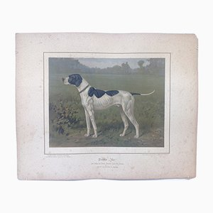 H. Sperling für Wilhelm Greve, Zeigerhund, Antike Chromolithographie eines reinrassigen Hundes