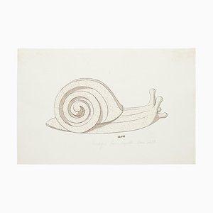 Unknown, Snail, Original Aquarell und Tusche Zeichnung, 19. Jahrhundert