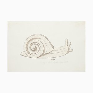 Unknown , Snail , Original Watercolor and Ink Drawing , 19th Century