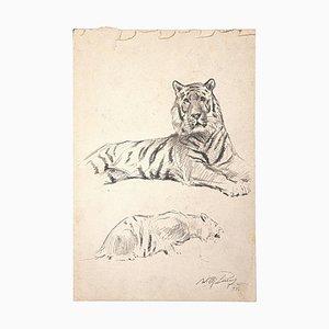 Wilhelm Lorenz, Étude d'un Tigre, Crayon Sur Papier, Fin 20ème Siècle