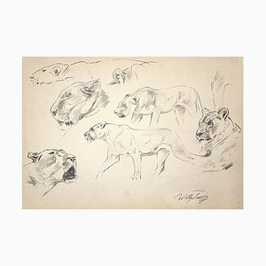 Wilhelm Lorenz, Lioness, Pencil on Paper, Late 20th Century