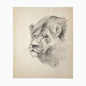 Willy Lorenz, Lion, Pencil on Paper, Late 20th Century