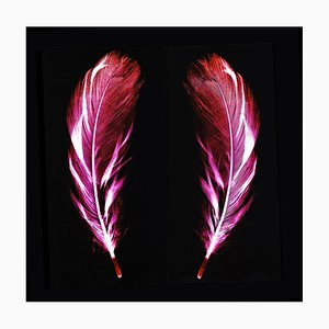 Flight of Fancy - Electric Pink Feathers - Conceptual, Farbfotografie 2017
