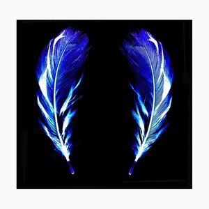 Flight of Fancy - Electric Blue Feathers - Conceptual, Color Photography 2017