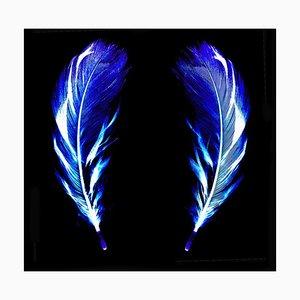 Flight of Fancy - Electric Blue Feathers - Conceptual, Farbfotografie 2017