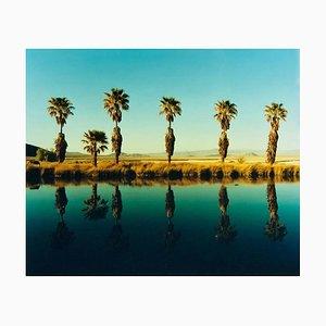 Zzyzx Resort Pool II, Soda Dry Lake, California - Farbfotografie mit Palmen-Motiven 2002