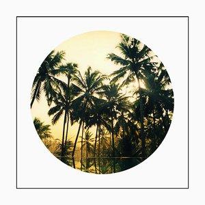 Piscina Vetyver, Kerala - Tropical Palm Print Color Photography 2013