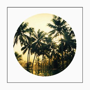 Vetyver Pool, Kerala - Tropical Palm Print Color Photography 2013