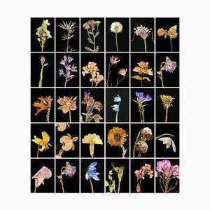 Imprimés Photographie botanique Chincherinchee 2019