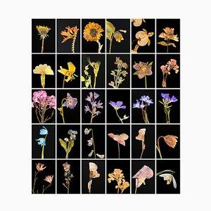 Dandelion - Botanische Farbfotografie Prints 2019