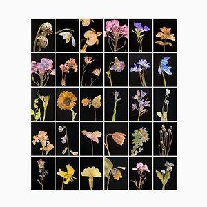 Mohnblume - Botanische Farbfotografie Prints 2019