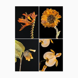 Crocosmia Iv - Botanische Farbfotografie Prints 2019