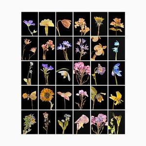 Geranie - Botanische Farbfotografie Drucke 2019
