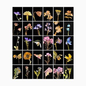 Geranium - Botanical Color Photography Prints 2019