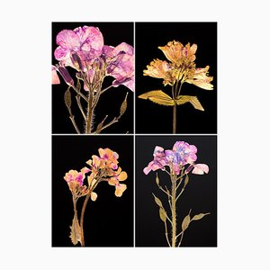 Honesty Iv - Botanical Color Photography Prints 2019