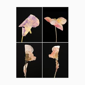 Pansy Iv - Botanical Colour Photography Prints 2019