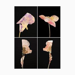 Pansy Iv - Botanische Farbfotografie Prints 2019