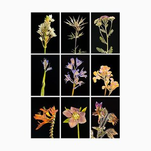 Chincherinchee Ix - Botanical Color Photography Prints 2019