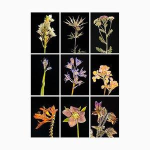 Chincherinchee Ix - Botanische Farbfotografie Prints 2019