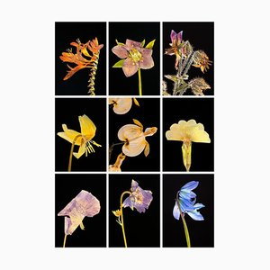 Crocosmia Ix - Botanical Color Photography Prints 2019