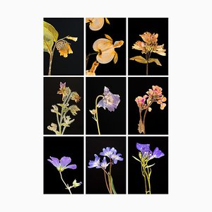 Comfrey Ix - Botanische Farbfotografie Prints 2019