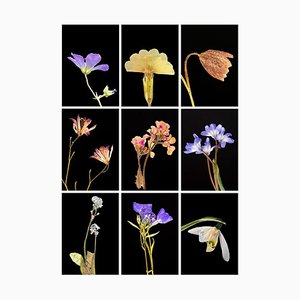 Geranium Ix - Botanical Color Photography Prints 2019