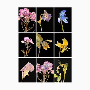 Honesty I.ix - Botanical Colour Photography Prints 2019