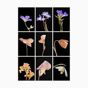 Geranium Iv.ix - Botanische Farbfotografie Prints 2019