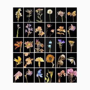 Chincherinchee - Botanische Farbfotografie Prints 2019