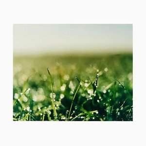 0°00 Longitude, 52°38n'' Latitude, Dew - Landscape Color Photography 2009