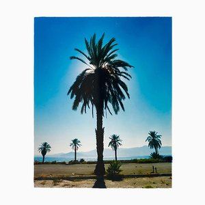 Palm Tree, Salton Sea, California - Blue Sky Palm Print Color Photo 2003