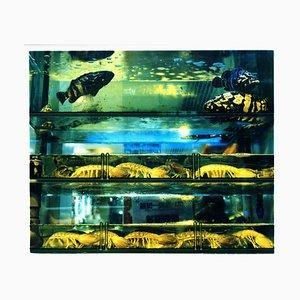 Richard Heeps, Wet Market, Kowloon, Hong Kong, Fish Tank Color Lámina fotográfica, 2016