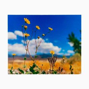 Hell's Gate, Death Valley, Kalifornien - Amerikanische Landschaft Farbfotografie 2000