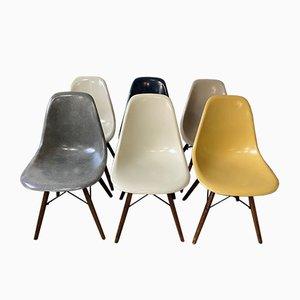 Dunkelblaue Mid-Century Nussholz DSW Esszimmerstühle von Charles & Ray Eames für Herman Miller, 6er Set