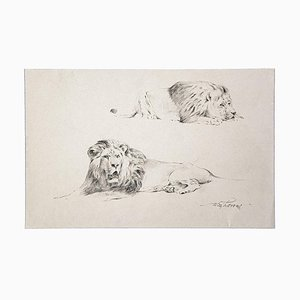 Wilhelm Lorenz - Study of Lion - Original Pencil On Paper by Wilhelm Lorenz - Mid-20th Century