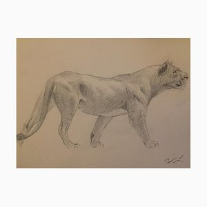 Wilhelm Lorenz - Lioness - Original Pencil On Paper by Wilhelm Lorenz - Mid-20th Century